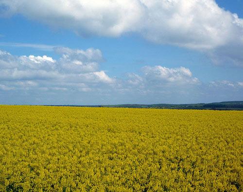 Problems of Agriculture – Market Failure   Economics Help