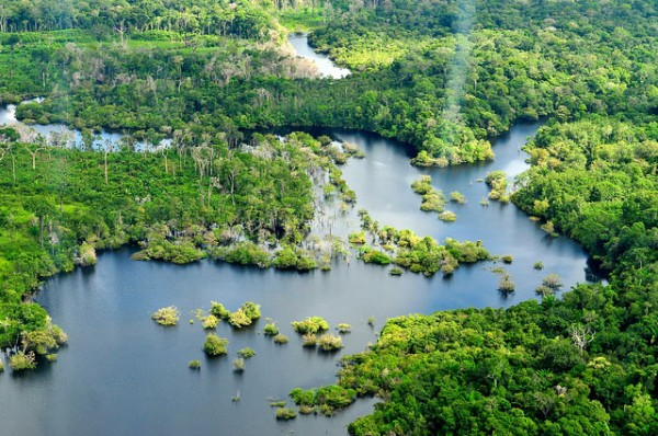 How can an economist save the Rain Forest?
