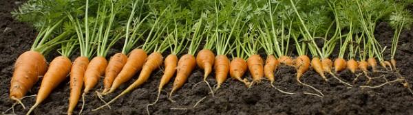 The problem of rejected / misshaped vegetables